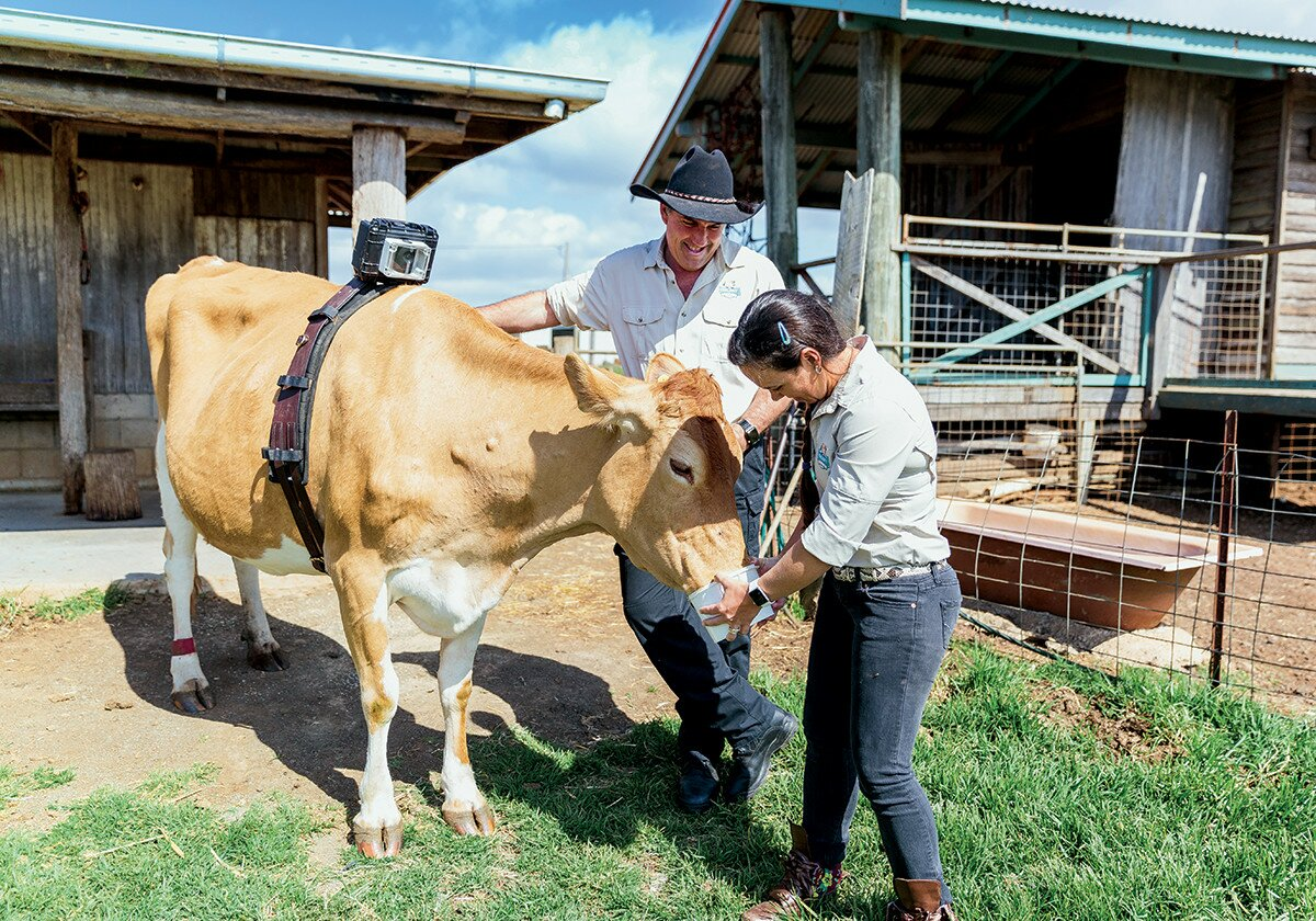 Profile Magazine Online MalenyDairies Cow to cup
