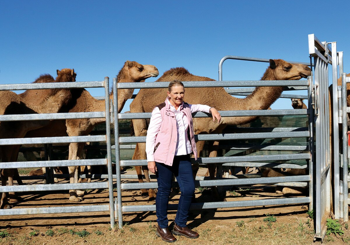 Profile Magazine Online QCamel2 'Udderly' good for you