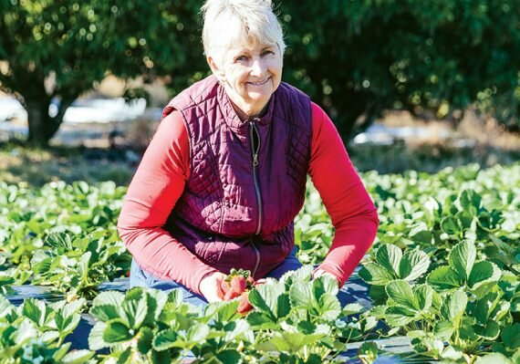 Lillian mcmartin strawberries