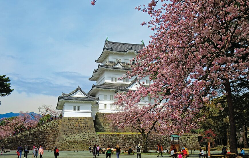 Travel Feature: The top places to visit in Japan in spring